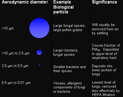 Figure 1 is useful for predicting aerodynamic behavior of a particle in air. The large fungal spores or large polen grains, at an aerodynamic diameter of >10µm, will usually be removed from air by setting. The larger bacteria or fungal spores, at an aerodynamic diameter of >10µm to 2.5 µm, is deposited in the upper level of the respiratory tract. The smaller bacteria and their spores, at an aerodynamic diameter of 2.5 µm to 0.5 µm, deposit into the lower portion of the lungs. The viruses and allergenic components of fungi or bacteria, at an aerodynamic diameter of 0.5 µm to 0.01 µm, are at the the lowest level of the lungs and are removed less effectively by HEPA filtration.