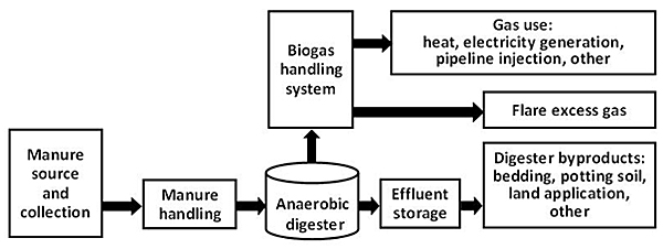 Illustration that shows the stages of the anaerobic digestion process, starting with the manure source and collection, then manure handling, and into the anaerobic digester. From there, the waste moves into the effluent storage and turns into digester byproducts such as bedding and potting soil, and for land application use. Also, after the manure goes into the anaerobic digester, it moves into the biogas handling system, where it is converted into either flare excess gas or other types of gas to be used for heat, electricity generation, and pipeline injection.