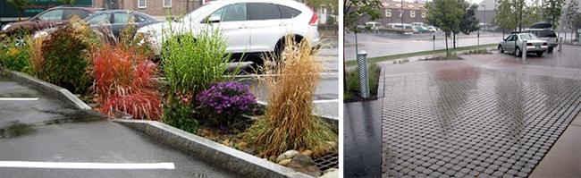 two side-by-side images: right, native plants featured on this parking lot site and left, parking lot with permeable pavers
