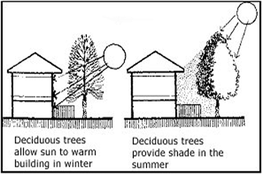 line drawing showing a house with deciduous trees allowing sun in winter and providing shade in summer